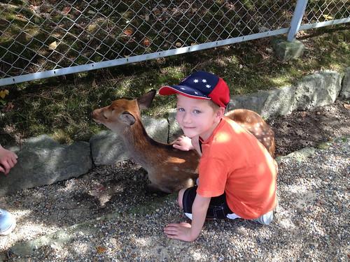 Nara Deer Park IMG_3295