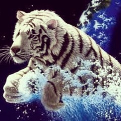 animal, big cats, tiger, organism, mammal, fauna,