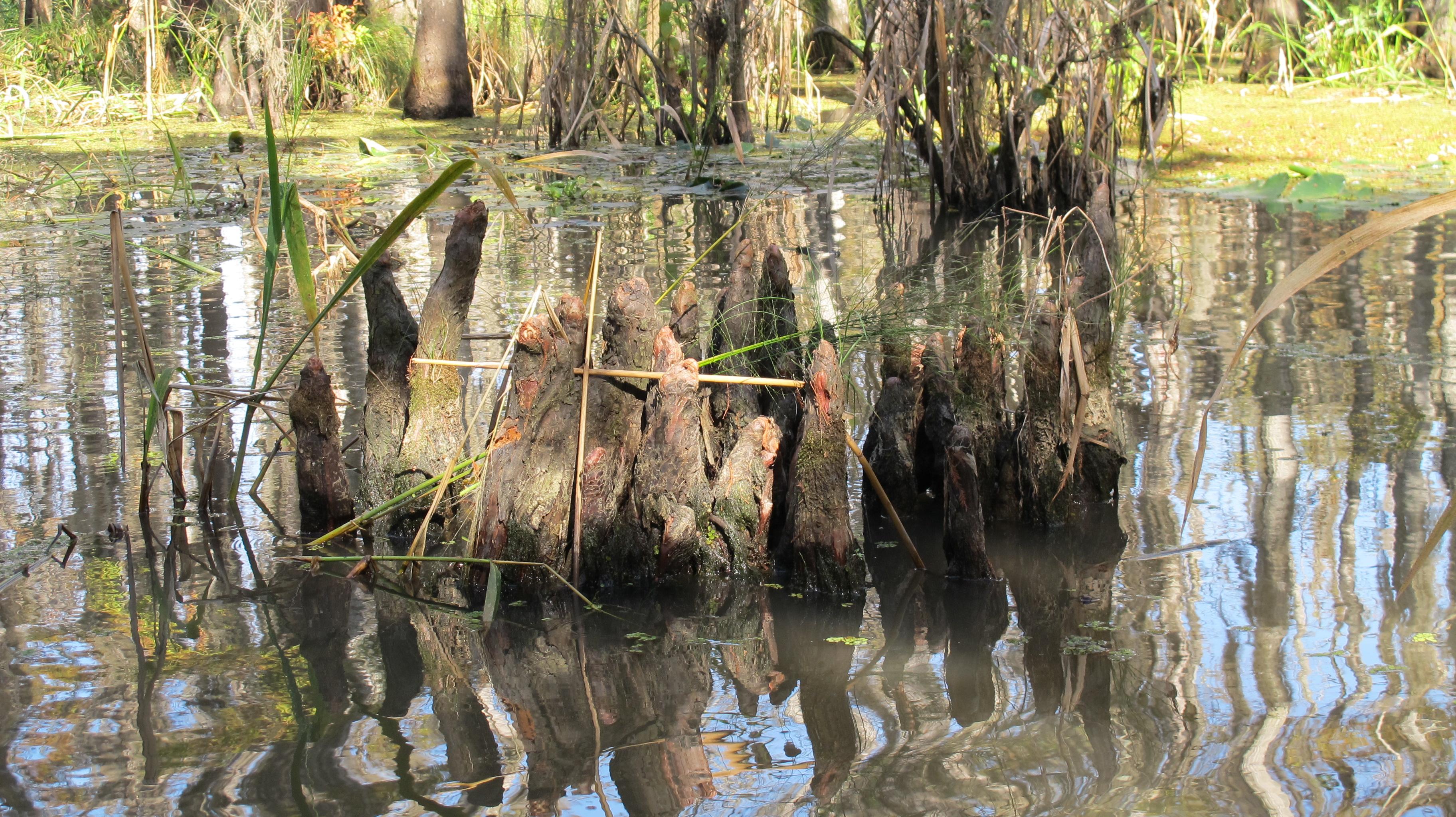 Cajun Cabins of Bayou Corne Louisiana