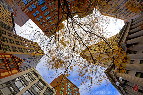 Looking Up at Custom House Clock Tower in Late Fall, State Street Downtown Boston by Greg DuBois Photography
