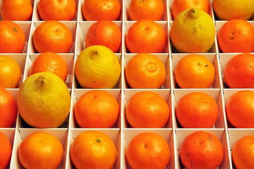 Warum Die Zitronen Sauer Wurden Brigitte Stolle