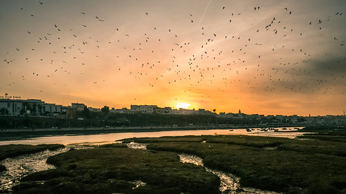 africa city sunset sky copyright nature birds river landscape lumix day cloudy flock panasonic morocco maroc paysage 風景 rabat photographe 14mm salé bouregreg gx1 14mmf25 aminefassi aminefassicom