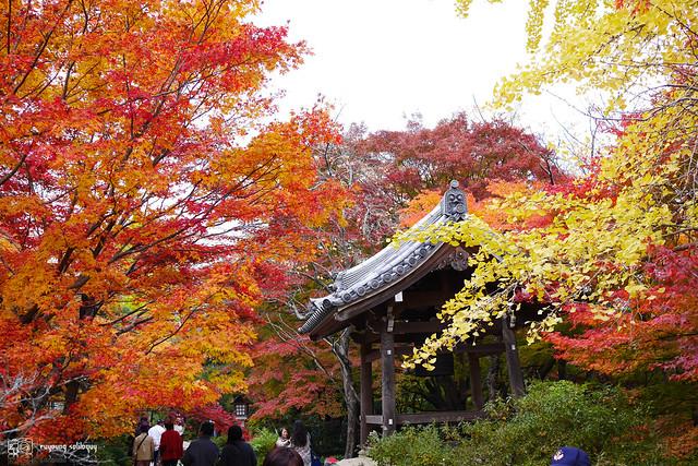 Panasonic_GX7_Kyoto_27