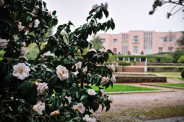 The Gardens of Serralves In Winter