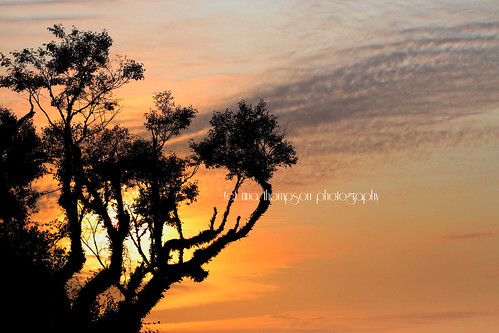 sunset newzealand tree nature weather silhouette rural nz foxglacier southisland westcoast westland southwestland rinathompson