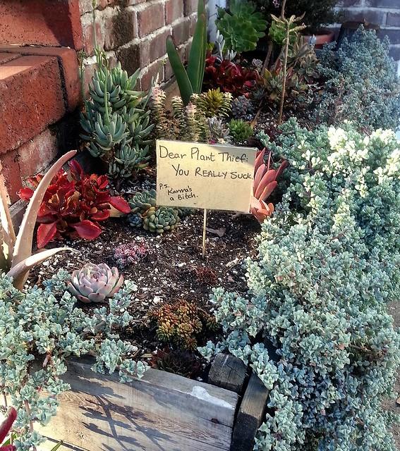 Plant Theft