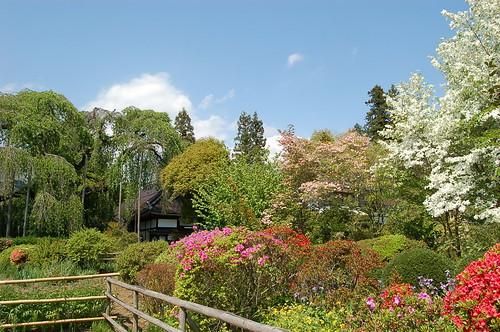 慈雲寺の庭