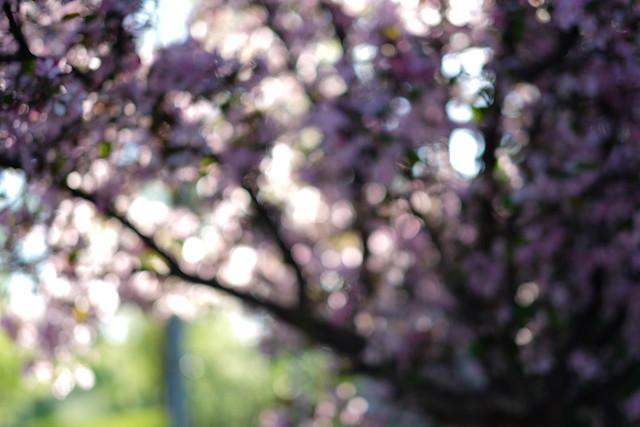 A Burst of Blossoms-3