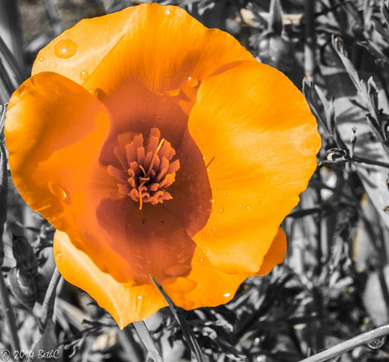 129/365 Flower Power