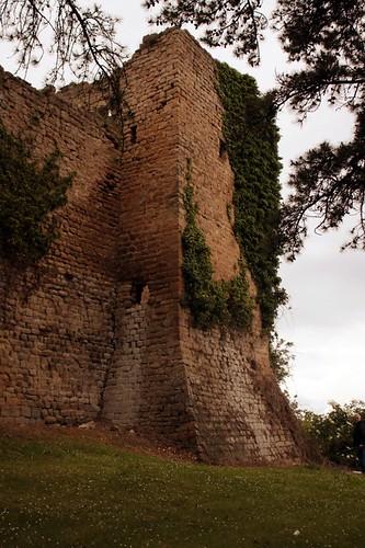 San Ginesio: edera lungo le mura