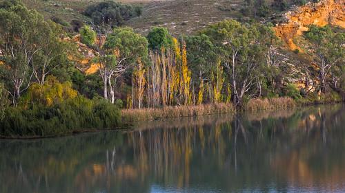 autumn reflection fall water silhouette landscape countryside australia southaustralia murrayriver splendid splendour splendor greystump copyrightcolinpilliner
