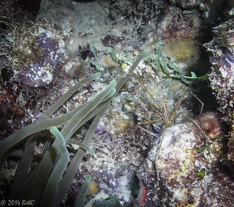 165-365 Arrow Crab