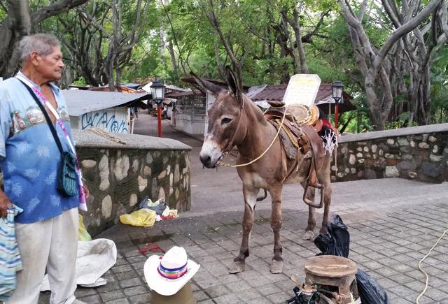 burro-isla-cuale-rio