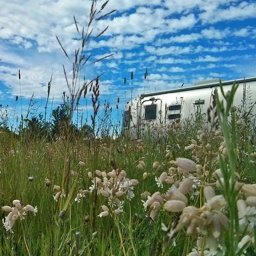We pulled off onto a dirt road searching for ruins from an old mine. We never did find them but we did find a field of blooming wildflowers. #consolationprize #puremichigan #airstream #liveriveted