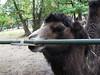 Zoo Brno, foto: Petr Nejedlý