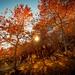 Feuillages d'automne en Chartreuse by Alexandre Carpentier