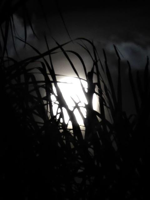 Leesburg, FL, Hawthorne at Leesburg, Misty Super-Moon