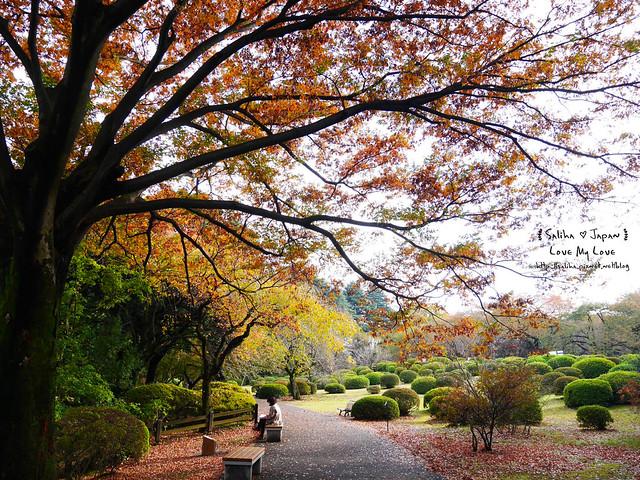 日本東京自由行新宿御苑庭園景點 (43)