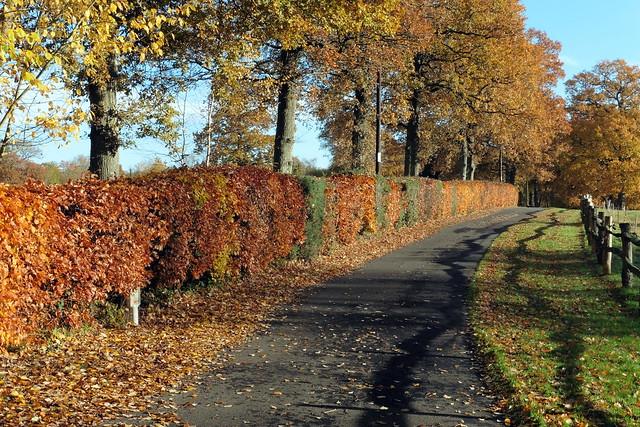 The Path Through Autumn, Panasonic DMC-TZ55