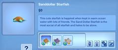 Sanddollar Starfish