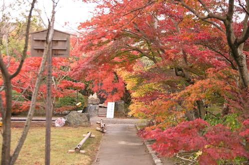【写真】2012 紅葉 : 勧修寺