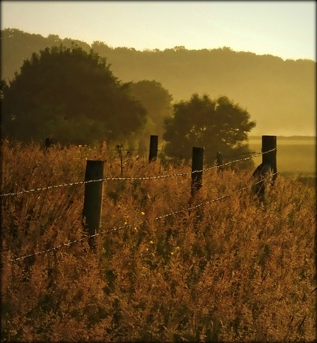 uk morning sun sunlight mist nature grass sunrise fence dawn countryside lancashire riverribble