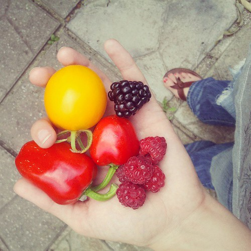 first sweet red peppers + first ripe blackberry! today is looking up :)