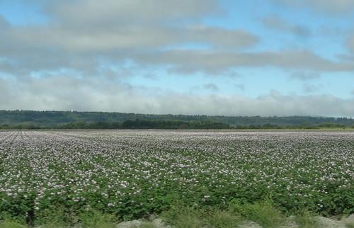 usa champs fields washingtonstate paysage