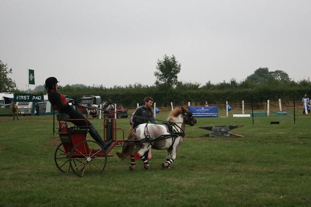 Uncooperative pony