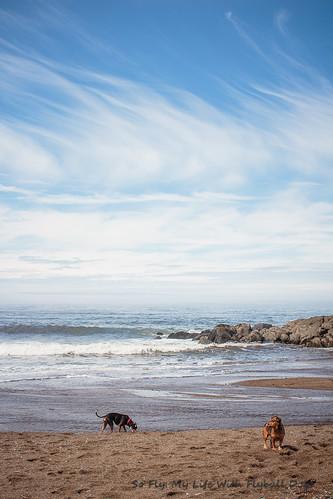 Beach Trip-8554