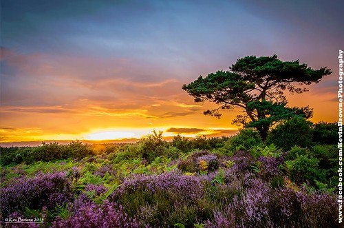 blue sunset red summer sky orange tree pine view heather dramatic august hampshire burning bloom romantic ferns newforest bratley blinkagain lovehampshire