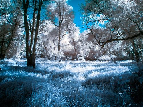 Blue Forest Grass IR