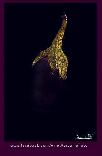 #Eggplant #باذنجان by Aries Parcum