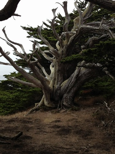 Point Lobos photos