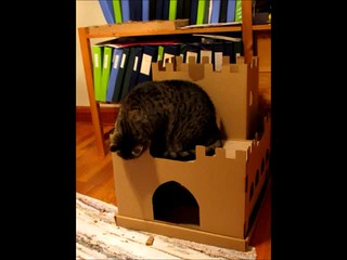 My cardboard box is my castle...