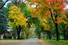 Fall colors around Minneapolis by Liz Nemmers