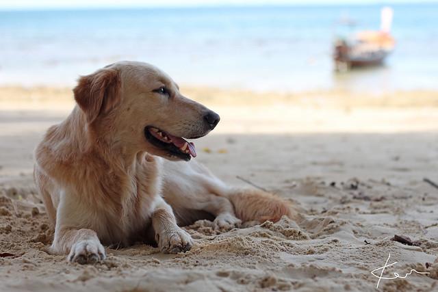 泰柬半月游(二)小黑妞、狗,还有寄居蟹-不想走