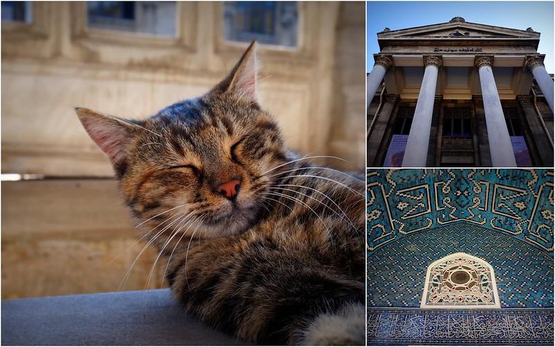 Stray-Cats-Istanbul-(4)