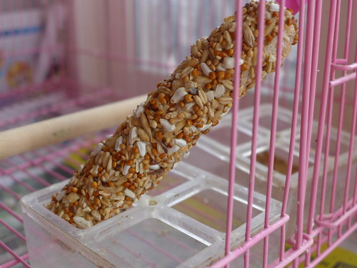 核果作成的鳥棒棒糖