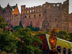 Schlossruine Heidelberg. Blick aus der Stadt auf den Friedrichbau und die Reste des englischen Baus sowie des dicken Turmes -- Heidelberg Castle ruins. View from the city to the Friedrichbau and the remains of the english house as well as the thick tower
