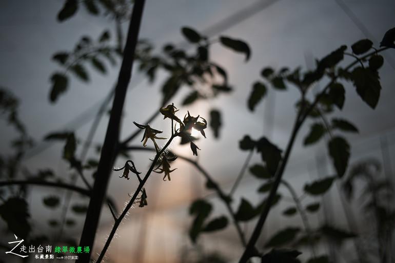 綠翠微農場 (19)