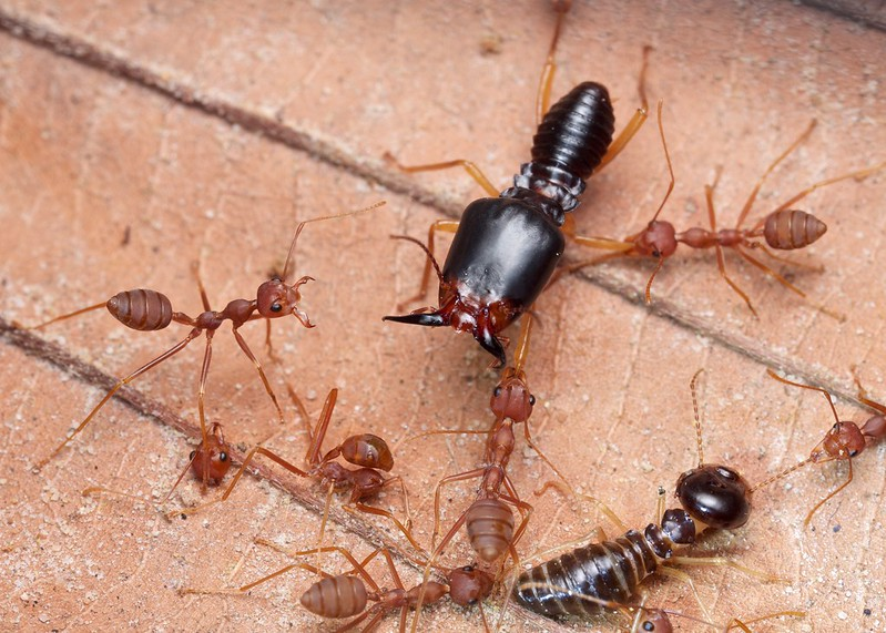 Worker Ant Vs Soldier Ant 24 rules (and counting...
