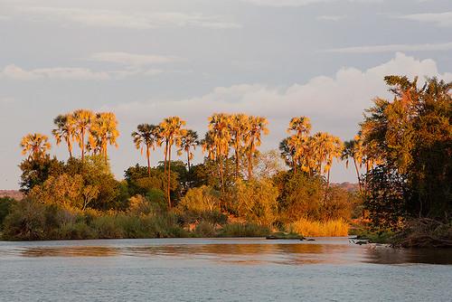 africa travel sunset tree nature river sonnenuntergang sundown urlaub ngc natur palmtree zimbabwe afrika victoriafalls fluss palme baum allrightsreserved zambezi simbabwe goldenlight 2013 thomasretterath copyrightthomasretterath