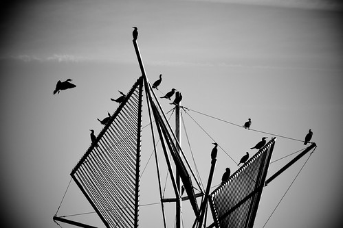 « The birds »