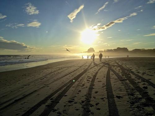 beach birds myrtlebeach sunday sunny flare hdr bords