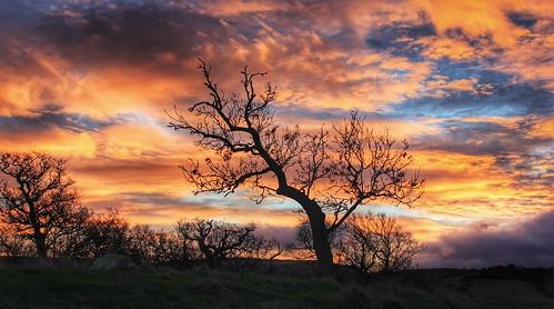 trees sky cloud tree clouds sunrise redsky goldenhour graig northwales glanconwy ef28135mmf3556isusm bbcwalesnature canoneos550d ashperkins