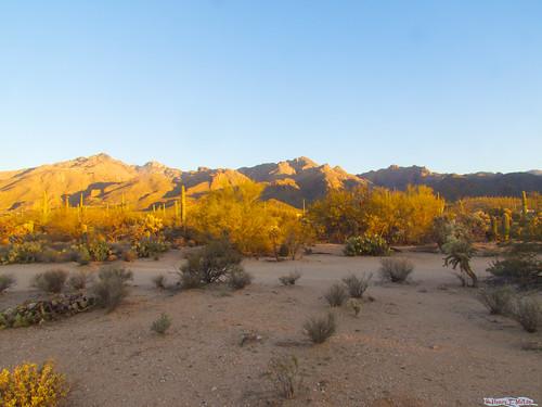 sunrise sabinocanyon tucson arizona