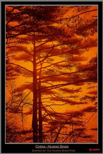 world china old orange mountain get heritage colors yellow fog pine canon vintage nebel alt retro unesco sl gelb list bonsai duotone uni shan kiefer huangshan huang anhui yelloe pinus 40d canon40d sagelight sagelighteditor pmbvw hwangshanensis worldgetcolors huangshanberg