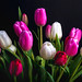 Tulips by Mr Noded