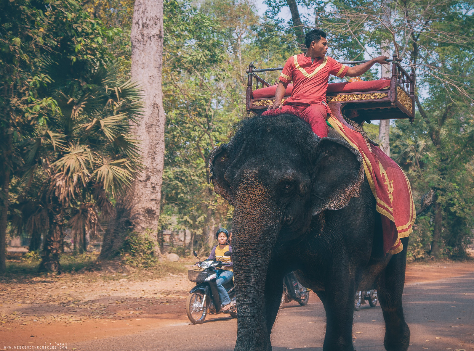 Another common sight in Siem Reap are elephants used as vehicles